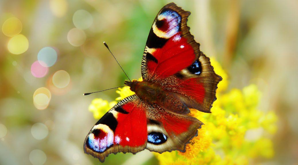 Wie du dich als ehrenamtliche Führungskraft von einer Raupe zum Schmetterling entfalten kannst